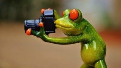 Photo of بيع الصور على الإنترنت: طريقة ممتازة للمصورين المحترفين